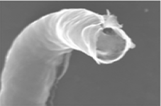 SEM of Pd-nanotube